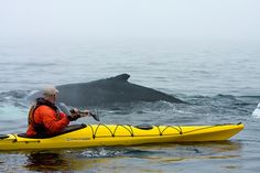 A Whale surfaces Near a Kayaker by Newfoundland and Labrador Tourism, via Flickr - that is sooo close to a humpback whale.  I have whale envy!