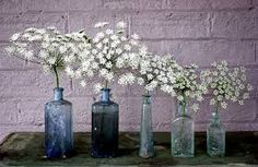Image result for queen anne's lace bouquet
