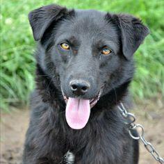 Komea Django 💜💜Perustiedot Rosiori de Veden kaupunki Romaniassa on koiraihmisen näkökulmasta surullinen paikka. Ainoan toivon kipinän paremmasta huomisesta tuo uuttera eläinsuojelija Cornelia Stan, joka on omistanut elämänsä näiden koirien auttamiseen. Cornelia käy säännöllisesti hoitamassa ja ruokkimassa koiria ja järjestää niitä ulkomaalaisten adoptioiden…Lue lisää ›