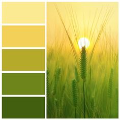 Created using Color Inspiration Tool For iOS - - - gold - Drab ( - olive green Green Color Names, Yellow Paint Colors, Green Name, Olive Green Color, Yellow Painting, Green Colors, Green Pallete, Colour Pallette, Colour Schemes