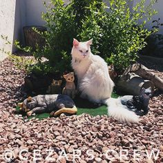 Last day of hanging out with the gang Vatos Locos forever  #travelingcat and #cutcatcrew enjoys the sun in #spain