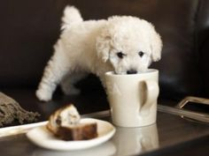 small breeds of dog - Google Search