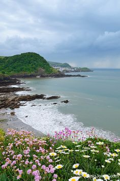 Spring flowers on Rillage Point overlooking Hele Bay, Beacon Point and Ilfracombe. North Devon, England, United Kingdom.