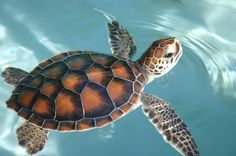 Turtle by EmergingLight.deviantart.com on @deviantART