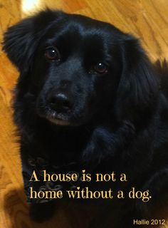 A house is not a home without a dog.  ♥ Hallie