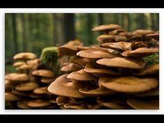 BBC How Plants Communicate & Think - Amazing Nature Documentary - YouTube