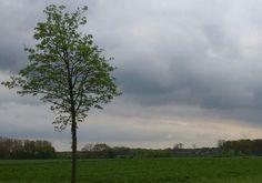 Felder an der Straße nach Delhoven, Foto: S. Hopp