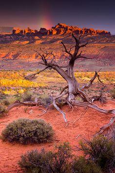 """landscape-lunacy: """"Desert Rainbow in Arches National Park, Utah - by John De Bord """" Nature Pictures, Cool Pictures, Beautiful Pictures, Desert Pictures, Beautiful World, Beautiful Places, Stunningly Beautiful, Landscape Photography, Nature Photography"""