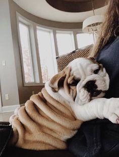The major breeds of bulldogs are English bulldog, American bulldog, and French bulldog. The bulldog has a broad shoulder which matches with the head. Cute Puppies, Cute Dogs, Dogs And Puppies, Doggies, Puppies Tips, Mastiff Puppies, Fluffy Puppies, Cute Baby Animals, Animals And Pets