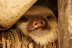 Your daily sloth