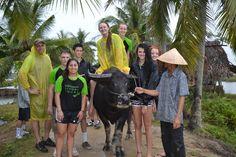 Beautiful water buffalo - a friend of the farmer. #VietnamSchoolTours #EcoTour #BuffaloRiding