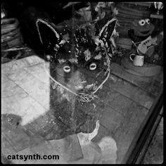 Storefront Cat