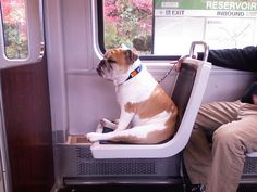 "Quote: ""This is going to be a good day.  A dog and his owner stepped on at Newton Center and after a short stint on the ground, Sir Pooch got a boost into the seat. I was in love."""