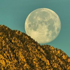 Photo by @TimLaman.  On the day after the supermoon eclipse on Feb 1, I photographed the supermoon setting as the sun rose and lit up the San Jacinto Mountains.  On the day after a full moon, the moon is always setting right after sunrise, and still very nearly full, making for some great photo ops.  The very clear desert air made the moon appear close enough to touch!  800mm lens plus a bit of cropping.  Follow me @TimLaman to see my images of birdlife from the Palm Springs area this week…