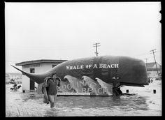 Carolina Beach after Hurricane Hazel - 1954, North Carolina
