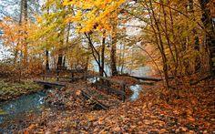 Autumn Wallpaper - Bing Images