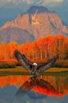 Eagle at Grand Teton National Park. Mount Moran in the background.