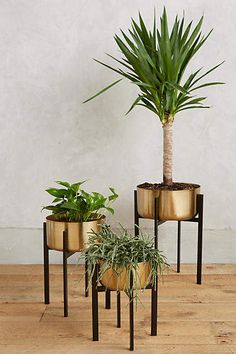 Anthropologie Rossum Metallic Plant Stand. Love these pots for houseplants. Modern chic #houseplants #pots
