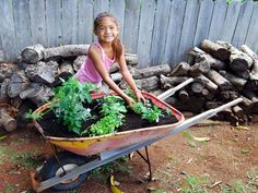 Plant an Herb Garden with a Reclaimed Wheelbarrow