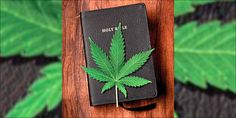 What Does the Bible Teach about the Cannabis Plant? - Christian Research Institute Cannabis Plant, Cannabis Oil, Poisonous Mushrooms, Ancient Near East, Research Institute, What Is It Called, All Plants, Smoking Weed, Drugs