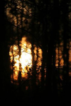 Follow the golden light (Marina W.)