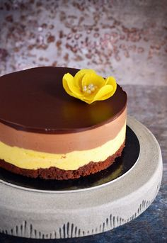 Csokis mangó mousse torta recept csoki virággal Chocolate mango mousse cake recipe with chocolate flower Mango Mousse Cake, Mango Cheesecake, Mango Cake, Bolo Original, Sweet Recipes, Cake Recipes, Mango Chocolate, Smoothie Fruit, Hungarian Cake