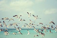 Gaivotas, Praia, Ave, Aves, Asas