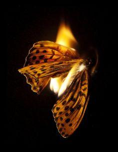 Mat Collishaw, Burning Butterfly 25, 2013