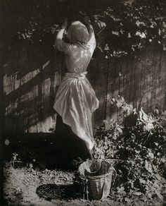 Henry Peach Robinson The Starling's Nest, 1900 Toned platinum print