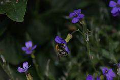 Bee food #saveourbees