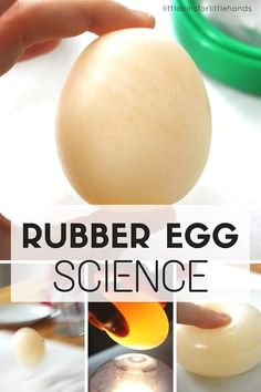 Naked Egg Activity Rubber Egg Science Fair Project