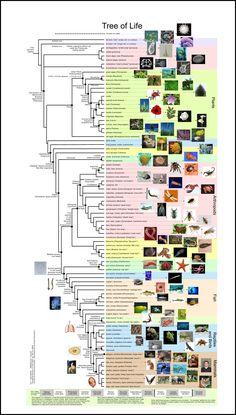Más tamaños | Tree of Life. | Flickr: ¡Intercambio de fotos!