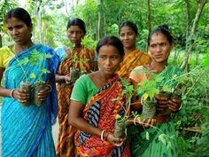 eniaftos: This Indian Village Plants 111 Trees Every Time a Girl Is Born