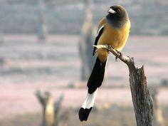 Sawai Mansingh Sanctuary - in Rajasthan, India