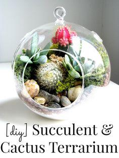 DIY Succulent & cactus Terrarium