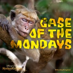 It's okay to be sleepy today, it's Napping Day! #NappingDay #MonkeyKingdom