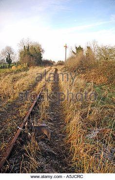 November, 2005. Wilkinstown, Ireland.A French Bulldog on railroad tracks at Wilkinstown.Photo:www.barrycronin.com - Stock Image