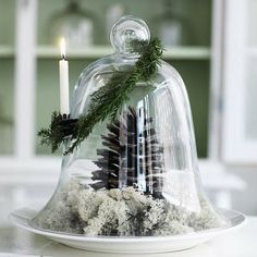 want to do several cloches on the mantel with natural elements