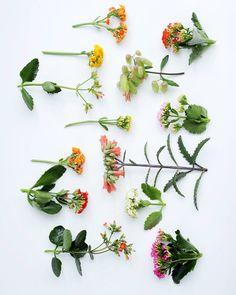 P L A N T P O R N / / we love the diversity of the Kalanchoe. Do you? #thejoyofplants #Kalanchoe #succulent