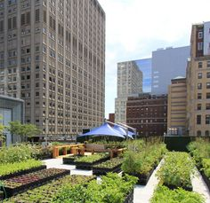 Do you have a small garden? Go urban farming or find a community that is active in urban farming. In several cities there are oppurtunities.