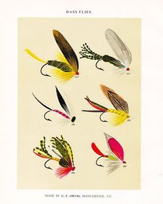 Vintage Fly Fishing Print Bass Flies Print Fishing Lure Print Bass Fishing Decor Cabin Decor Fishing Wall Art Gift for Dad Boyfriend by plaindealing on Etsy Vintage Bass, Vintage Fishing, Best Fishing Lures, Fly Fishing, Fishing Knots, Trout Fishing, Vintage Botanical Prints, Vintage Prints, Fish Gallery