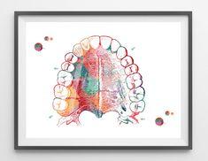 Mouth Anatomy Hard Palate and Teeth Art Print Medical Art Watercolor Maxilla Palatal Process Maxilla dental anatomy art speech therapy art. See all my Dental Art here: http://etsy.me/2oyblty Visit my shop here: http://etsy.me/2GrDwkX This is a watercolor print of my original painting.