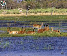 Okavango Delta, Botswana  |  The Okavango Delta is a vast inland river delta in northern Botswana.  |  Call Us Now: 0203 515 0804    |  #travel #botswana #okavangodelta #flights #airafrica