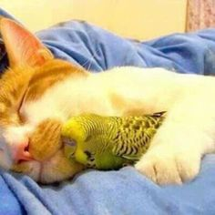 かわいい異なる動物仲良し画像猫インコ