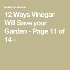 12 Ways Vinegar Will Save your Garden - Page 11 of 14 -
