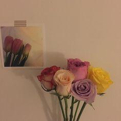 이미지: 꽃, 식물