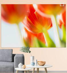 Tulp in tegenlicht
