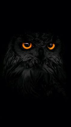 Wallpaper Samsung Galaxy - dark, black owl, iPhone Wallpaper:: Black Wallpapers: Cool Backgrounds app has b. - Wallpapers World Owl Wallpaper Iphone, Tier Wallpaper, Dark Wallpaper, Animal Wallpaper, Mobile Wallpaper, Iphone Wallpapers, Colorful Wallpaper, Flower Wallpaper, Wallpaper Quotes