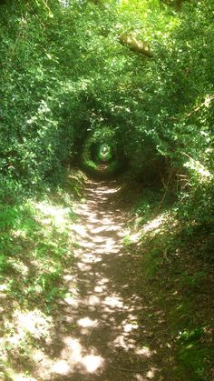 Surrey. England. But could it be the Greenwood (Mirkwood), Middle-earth?