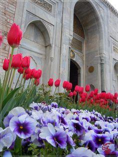 Primăvară în Istanbul | Turca La Un Ceai Istanbul, Plants, Plant, Planting, Planets
